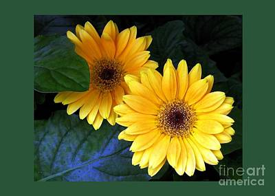 Two Yellow Dahlias Poster by Dale   Ford