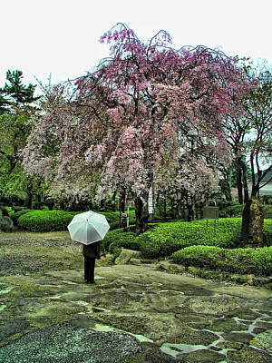 Umbrella With Cherry Blossoms Poster