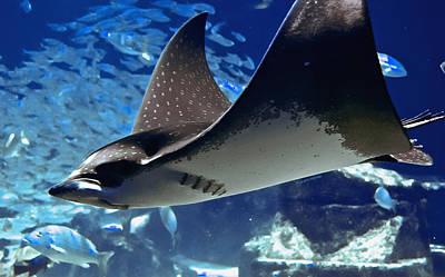 Underwater Flight Poster