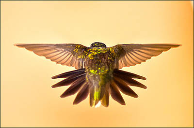 Poster featuring the photograph Usaf Hummingbirds Wings by Randall Branham