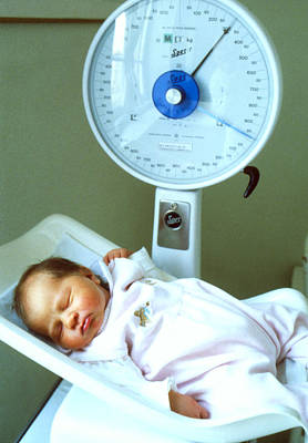View Of A Premature Baby Being Weighed Poster by Mauro Fermariello