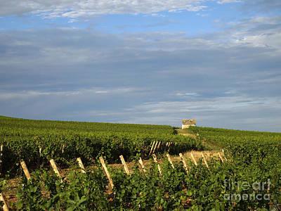Vines In Burgundy. France Poster by Bernard Jaubert