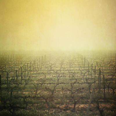 Vineyard In Mist Poster