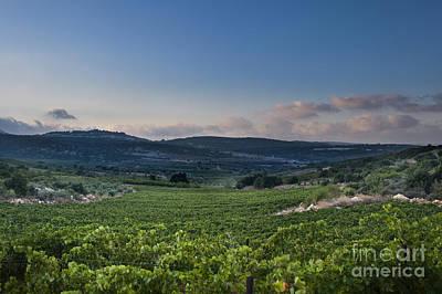 Vineyard In The Galilee Poster by Noam Armonn