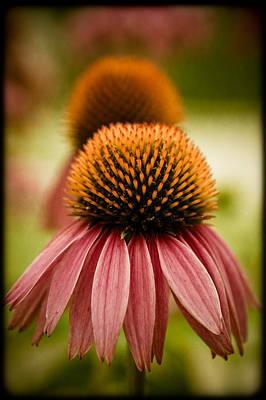 Vintage Flower Poster by Jen Morrison