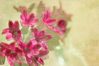 Vintage Hyacinth Poster