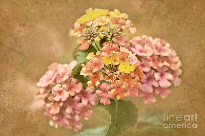 Poster featuring the photograph Vintage Lantana by Cheryl Davis