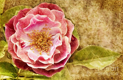 Poster featuring the photograph Vintage Rose by Cheryl Davis