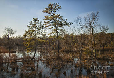 Virginia Swamp Poster by Jim Moore