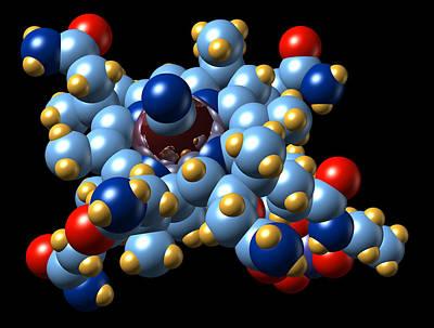 Vitamin B12 (cyanocobalamin) Molecule Poster by Dr Mark J. Winter