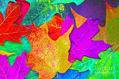 Vivid Leaves 1 Poster by Ginny Gaura