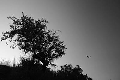 Vulture Sky Poster by Nina Fosdick