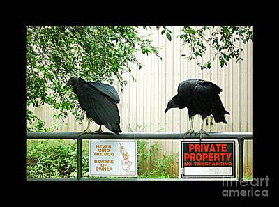 Poster featuring the photograph Vultures Guarding Property by Renee Trenholm