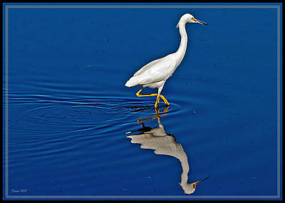 Walking Egret Poster