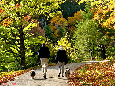 Walking The Dogs Poster