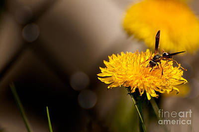 Wasp And Flower  Poster