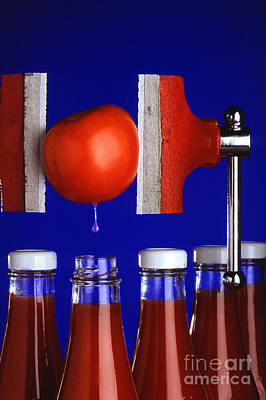 Water Extraction From Tomato Poster by Photo Researchers
