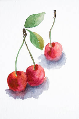 Watercolor Cherry  Poster