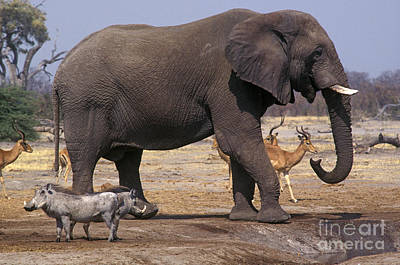 Poster featuring the photograph Watering Hole - Savuti Marsh Botswana by Craig Lovell