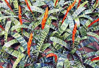 Watermelon Leaves Poster by Douglas Barnard