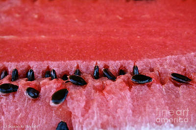 Watermelon Seeds Poster by Susan Herber