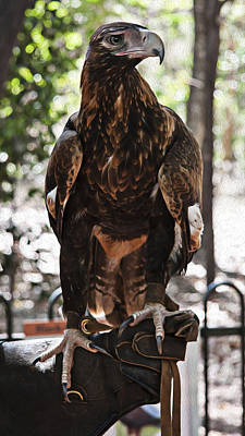 Wedge Tailed Eagle With Oil Painting Effect Poster by Zoe Ferrie