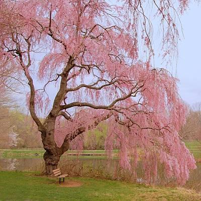 Weeping Spring- Holmdel Park Poster