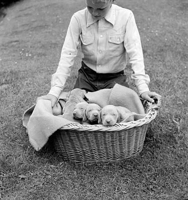 Weimaraner Pups Poster by Carl Sutton