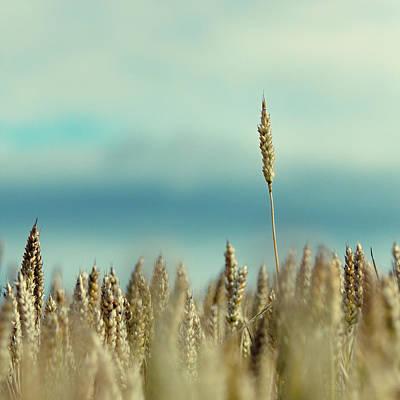 Wheat Field In Spain Poster