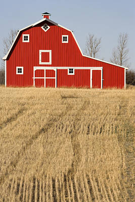 Wheat Fields And A Red Barn Poster