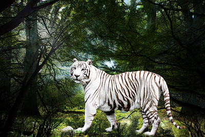 White Bengal Poster by Elizabeth Hart