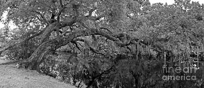 Poster featuring the photograph White City Oak Pano by Larry Nieland
