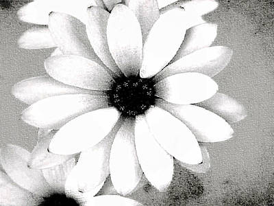 Poster featuring the photograph White Daisy by Tammy Espino