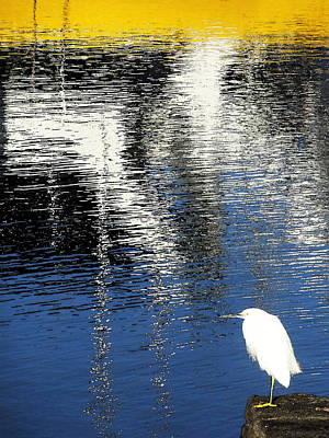 Poster featuring the digital art White Egret On Dock With Colorful Reflections by Anne Mott