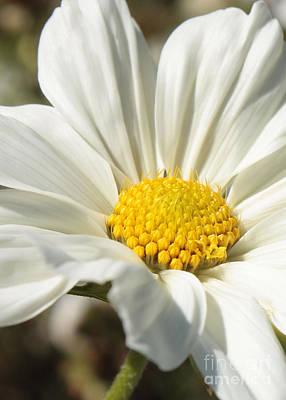 White Flower Poster by Carol Groenen