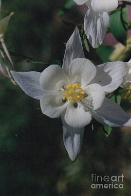White Flower Splendor Poster