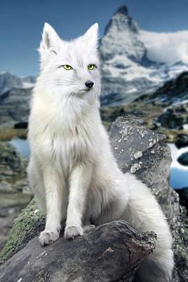 White Fox At Matterhorn Poster