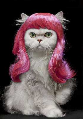 White Persian Cat Wearing Hot Pink Wig Poster
