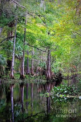 Wild Florida - Hillsborough River Poster by Carol Groenen