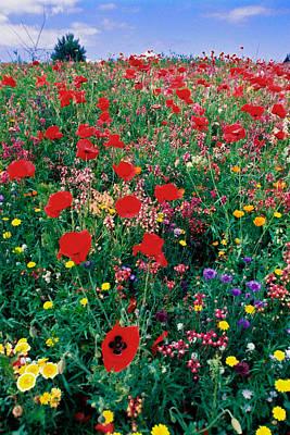 Wild Flowers 4 Poster
