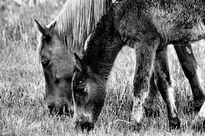 Wild Horses 1 Poster by Mickey Hatt