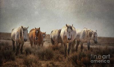 Wild Horses Roam Poster by Heather Swan