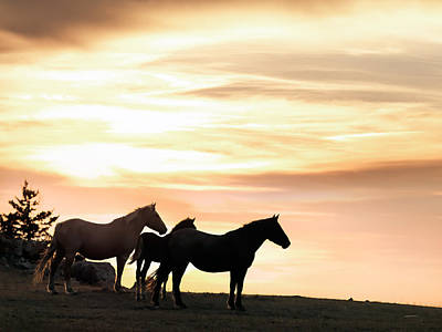 Wild Horses Sunset 3 Poster by Leland D Howard