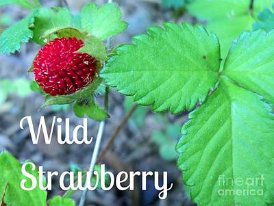 Wild Strawberry Poster Poster by Padre Art