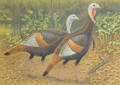 Wild Turkey Pair Poster by Alan Suliber