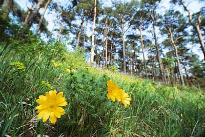 Wildflower Meadow, Unteres Odertal Poster by Norbert Rosing