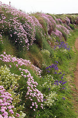 Wildflowers Along A Coastal Bank Poster by Dr Keith Wheeler