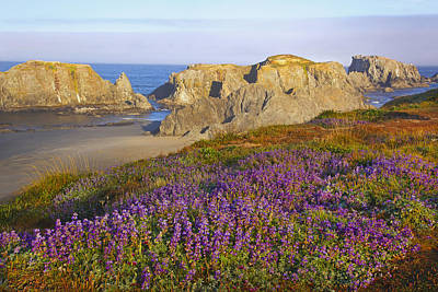 Wildflowers And Rock Formations Along Poster