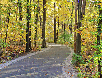 Wildwood Path In Fall Poster