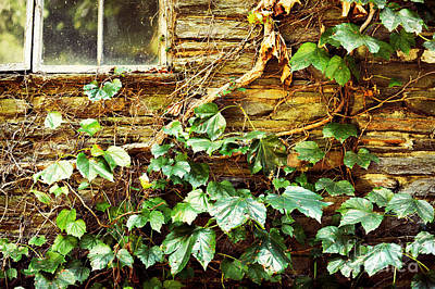 Window And Grapevines Poster by HD Connelly